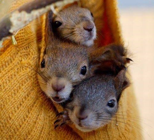 cute,squirrels