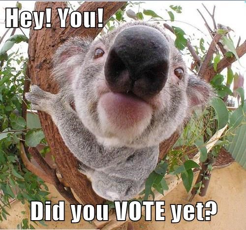 Hey! You!  Did you VOTE yet?