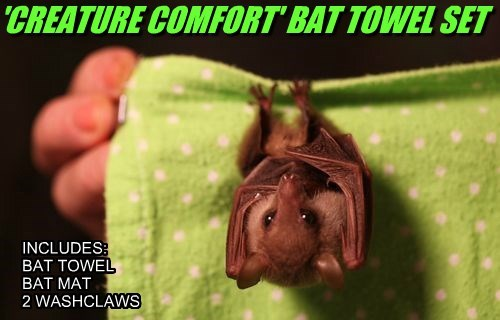 New from Bed Bat & Beyond