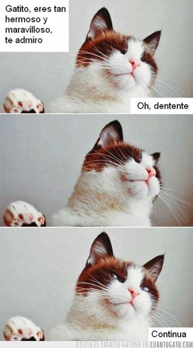 ¡Feliz día del gato!