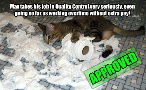 Cats Hard At Work
