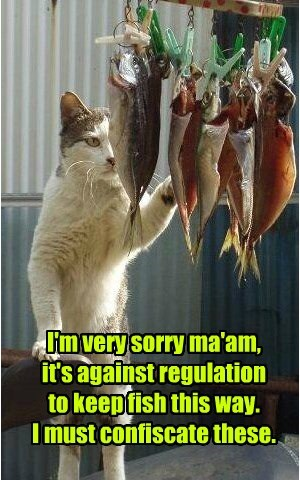 I'm very sorry ma'am,  it's against regulation  to keep fish this way.  I must confiscate these.