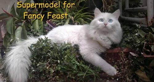 Supermodel for  Fancy Feast