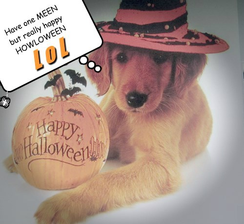 Have one MEEN  but really happy  HOWLOWEEN