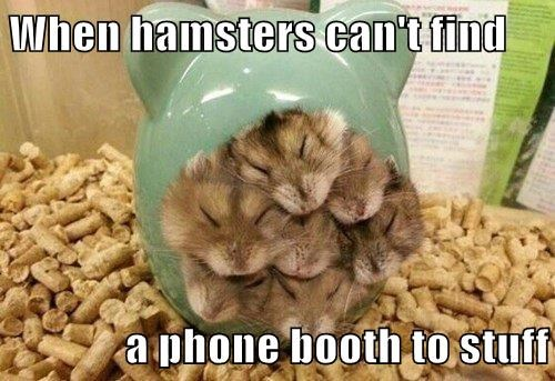 When hamsters can't find  a phone booth to stuff