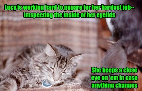 Hard Working Cat