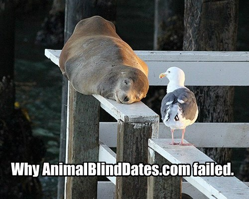 seal,Awkward,blind date,seagull