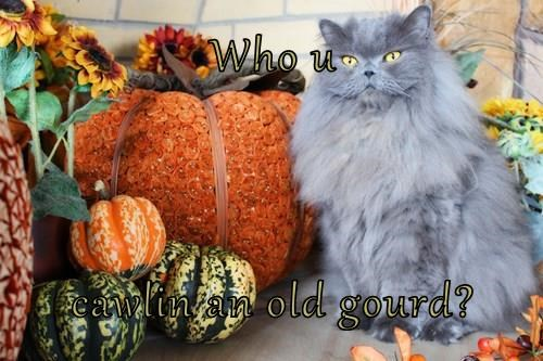 Who u   cawlin an old gourd?