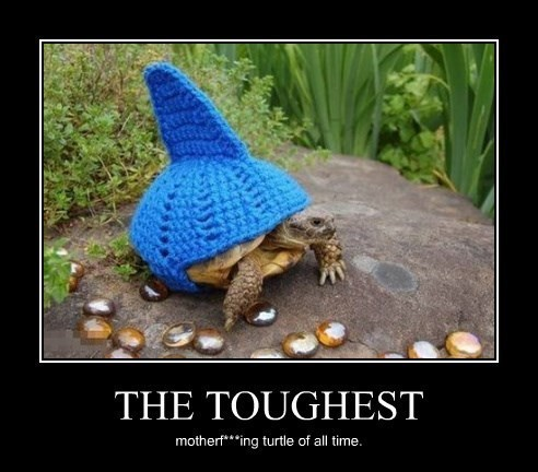 wtf,tough,turtle,funny