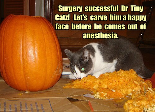 Surgery  successful  Dr  Tiny  Catz!   Let's  carve  him a happy  face  before  he  comes  out  of  anesthesia.