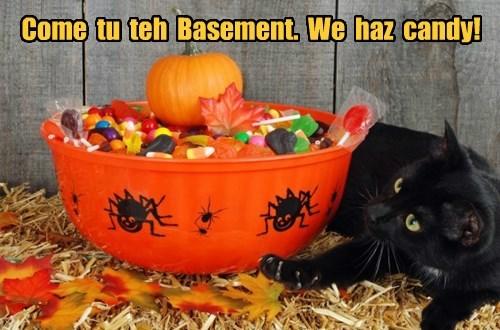 Come  tu  teh  Basement.  We  haz  candy!