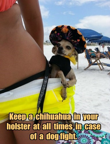 Keep  a  chihuahua  in  your  holster  at  all  times  in  case  of  a  dog fight.