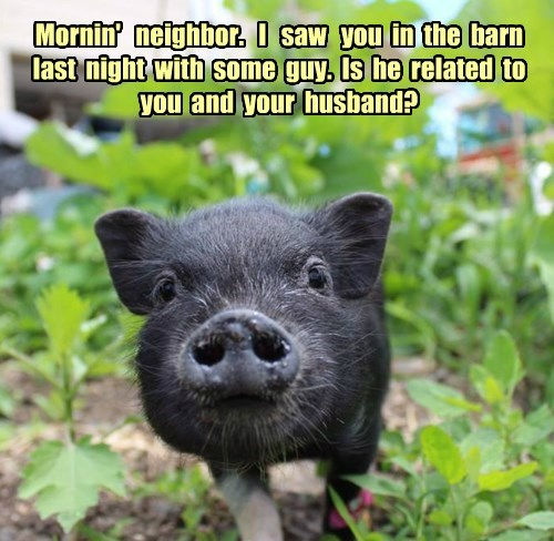 Just another Nosy Porker