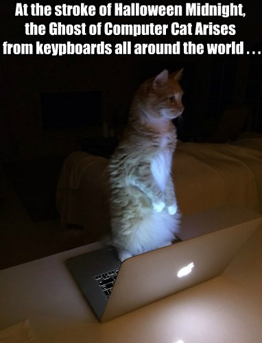 At the stroke of Halloween Midnight,  the Ghost of Computer Cat Arises  from keypboards all around the world . . .