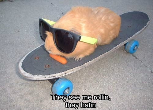 skateboarding,haters gonna hate,guinea pig