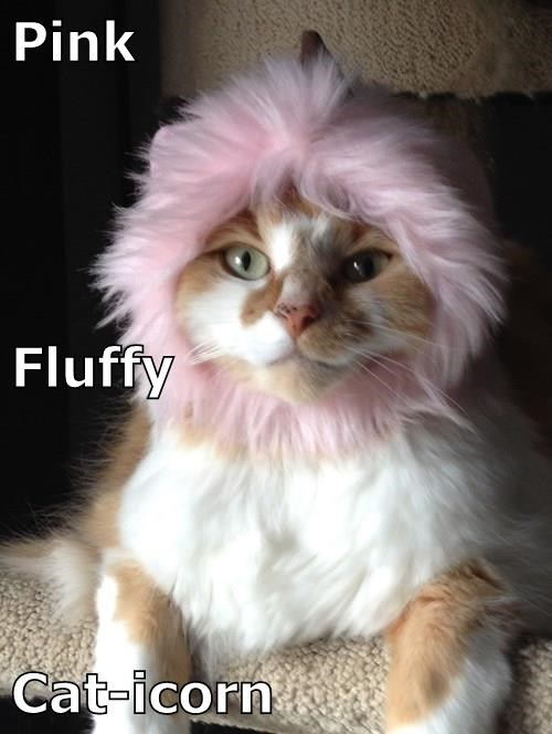 Pink Fluffy Cat-icorn
