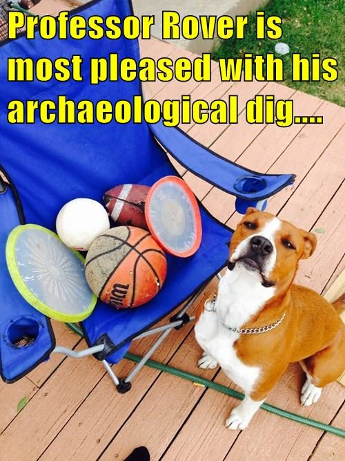 dogs,professor,dig,archaeological,captions