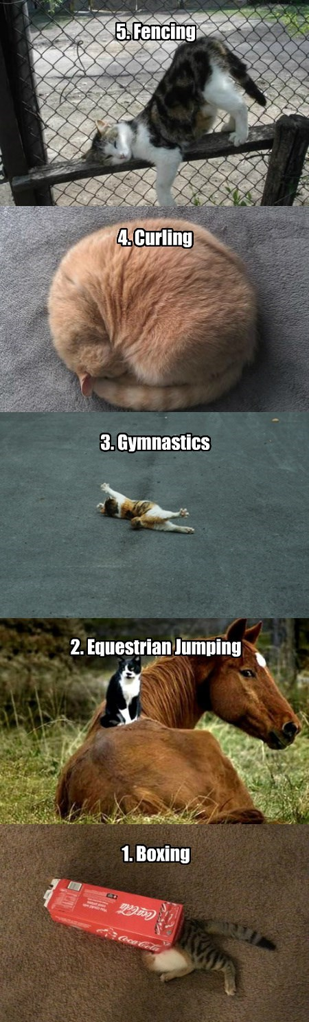 The Top Five Olympic Events for Cats