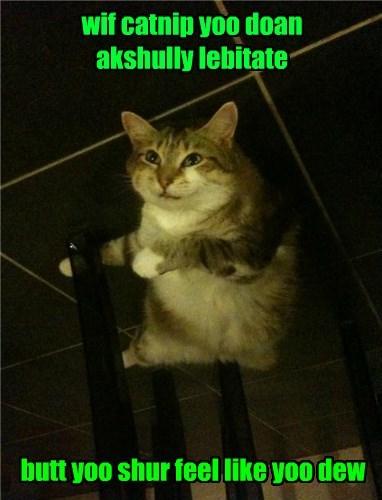 drugs,catnip,high,Cats