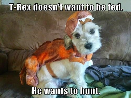 T-Rex doesn't want to be fed.  He wants to hunt.