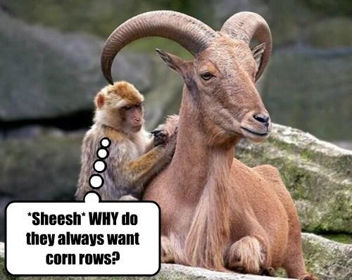 ram,horns,monkey