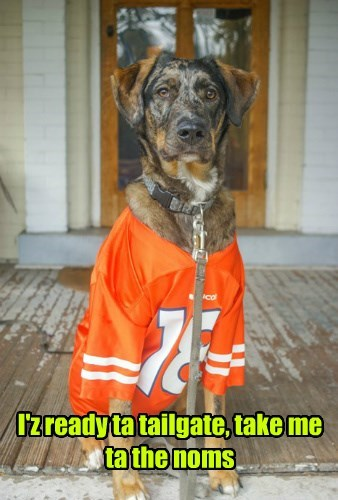 dogs,broncos,tailgating,football,noms