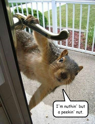 Peekin' Nut