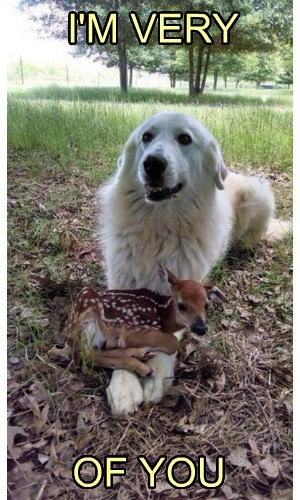 dogs,puns,deer,fawn