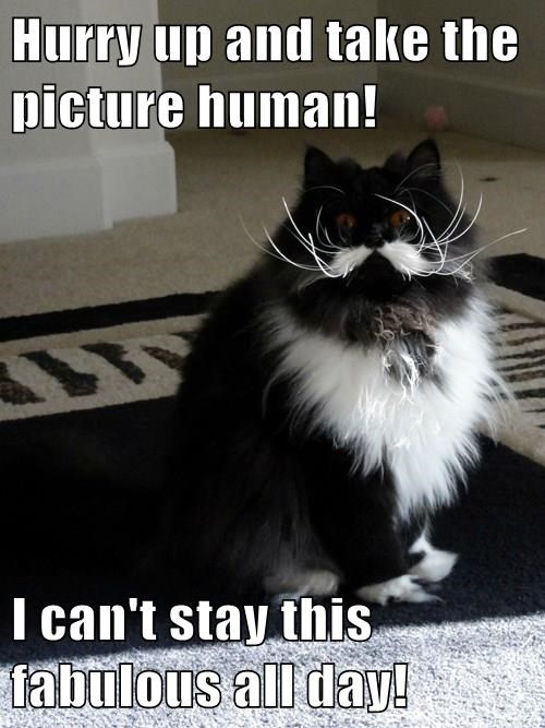 Hurry up and take the picture human!  I can't stay this fabulous all day!