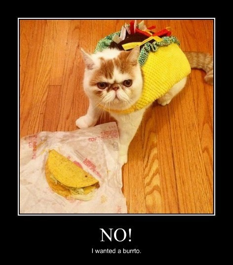 Strangely Cats Hate Tacos