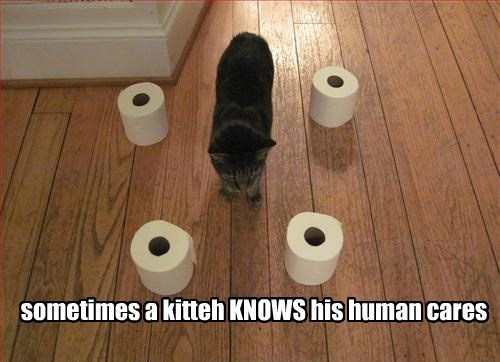 toys,toilet paper,love,Cats