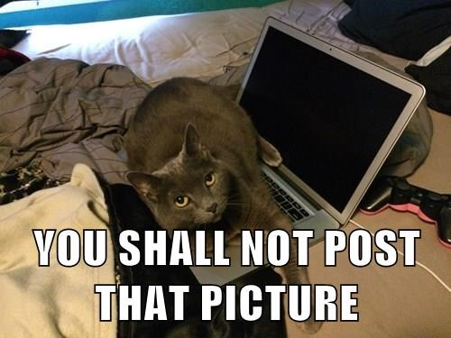 post,picture,Cats,you shall not pass