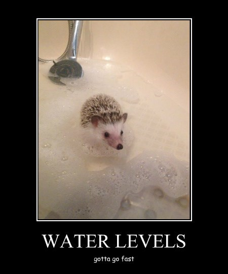 Everyone Hates the Water Levels