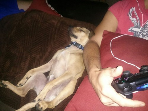 dogs,crappy,sleeping,funny