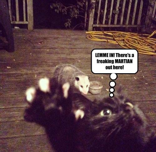 Cats,black cats,opossum,martian