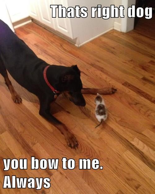Thats right dog  you bow to me. Always