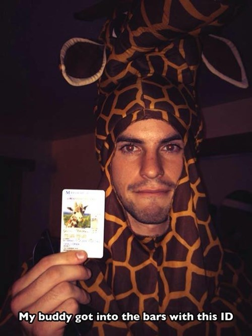 fake id,bars,giraffes