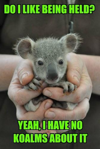 baby animals,puns,koala,squee