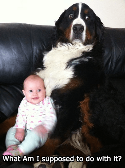 Nana Wasn't Always the Perfect Nanny Pup