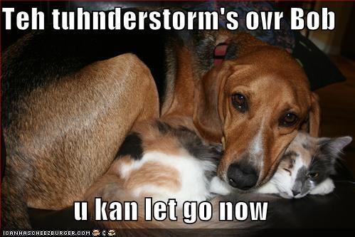 Teh tuhnderstorm's ovr Bob  u kan let go now