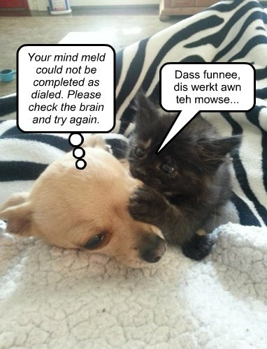 Cats,chihuahua,dogs,mind meld,Star Trek