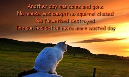 Another day has come and gone No mouse was caught no squirrel chased No flowerbed destroyed The sun has set on more more wasted day