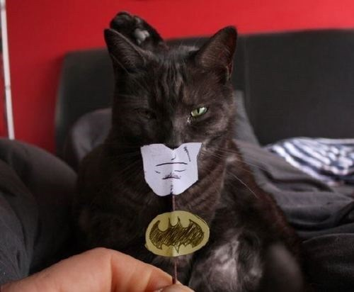The Dark Knight Meows