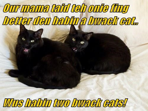 Our mama taid teh onie fing better den habin a bwack cat..  Wus habin two bwack cats!