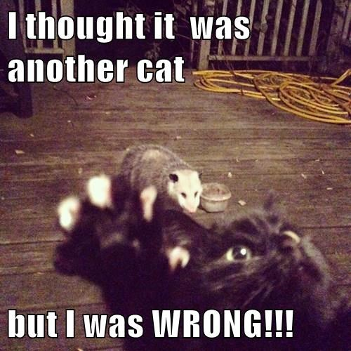 I thought it  was another cat   but I was WRONG!!!