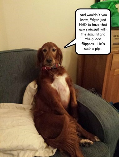 dogs,sophisticated,irish setter