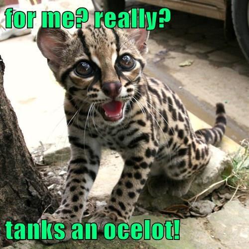 I'm Feline Good!