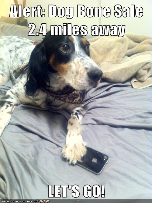 Alert: Dog Bone Sale 2.4 miles away  LET'S GO!