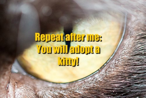 Repeat after me:  You will adopt a kitty!