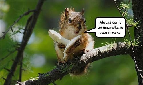 Sensible Squirrel
